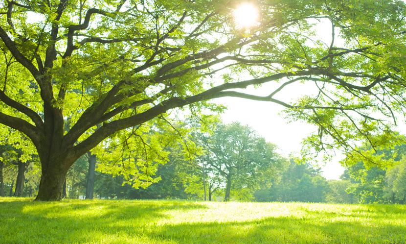 自然を感じる場所に行く【勉強のリフレッシュ方法5】